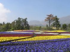 九重花公園の休日